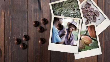 Cocoa Horizons Foundation - Support pour les agriculteurs
